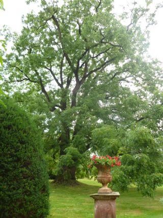 Schwarznussbaum-Schloss-Ebnet